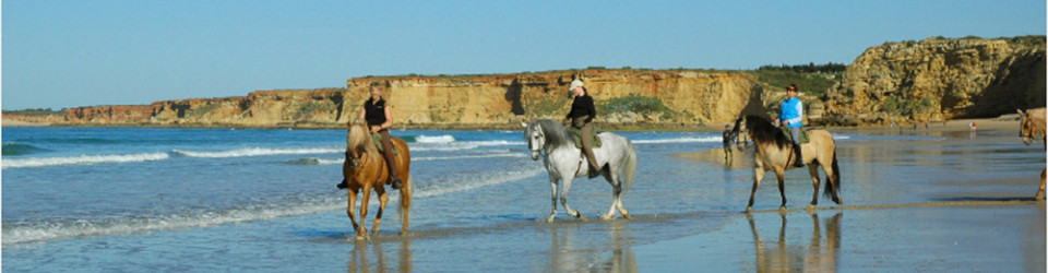 Reitstall Reitimmobilie riding school Conil Andalusien zu verkaufen Andalusia for sale