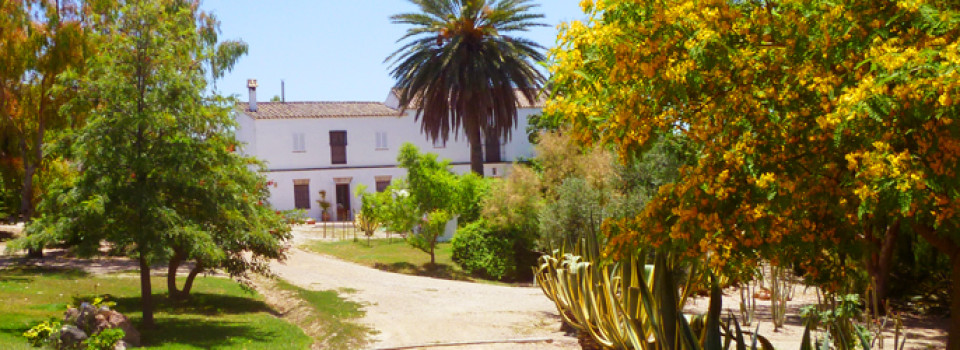 Finca Cortijo Reitimmobilie Landhaus Andalusien Arcos zu ver kaufen country property house Andalusia for sale