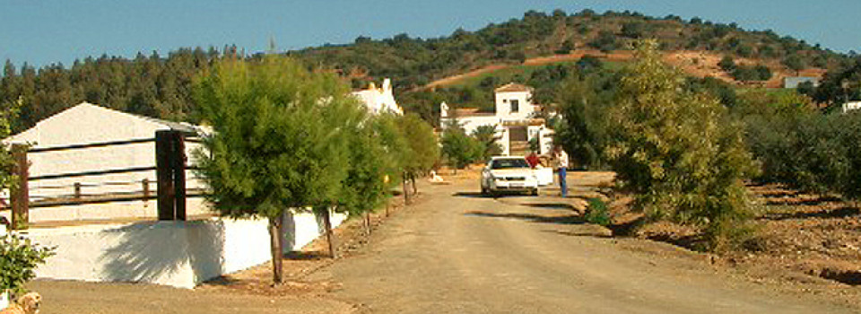 Immobilien_Spanien_Andalusien_Cadiz_Sevilla_Inland_Landhaus_Cortijo_Landsitz_Reitimmobilie_Finca_Pferdehaltung_Pferdebetrieb_Reitstall_Pferdehof_wohnen mit Pferden_Gestüt_Turismus_zu verkaufen