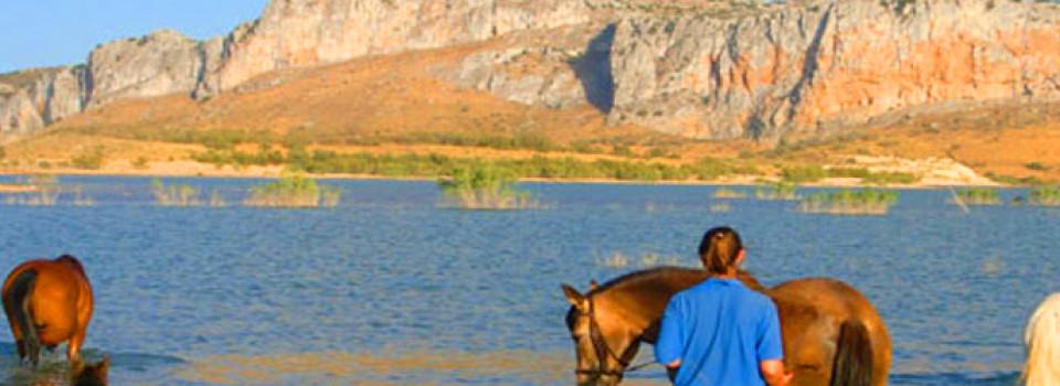Reiterhof Finca Andalusien Antequera Provinz Malaga zu verkaufen