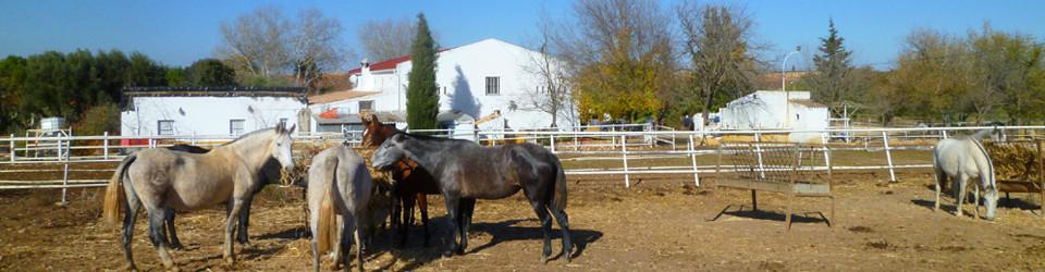 Gestüt Reitimmobilie Finca Süd-Spanien Andalusien Inland Arcos zu verkaufen