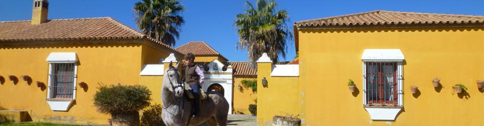 Cortijo Olive Finca Sevilla Andalusia Andalusia southern Spain Spanien for sale zu verkaufen