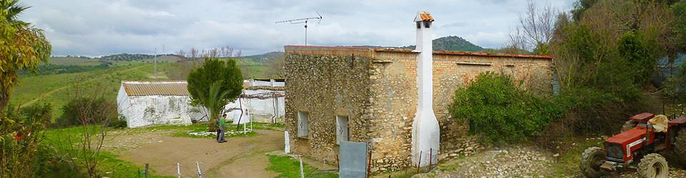 330.000 qm Olivenfinca, plantage, olivos, Andalusien, Provinz Cadiz, Alcala de los Gazules, zu verkaufen, for sale, en venta