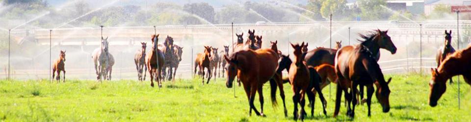 Madrid_Gestüt_Reitanlage_zu verkaufen_yeguada en venta_studfarm_equestrian property for sale