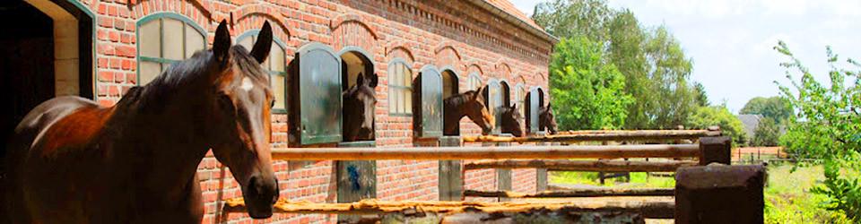 Gestüt. Reiterhof, Pferdehof, Pferdezucht, Zuchtstall Deutschland zu verkaufen