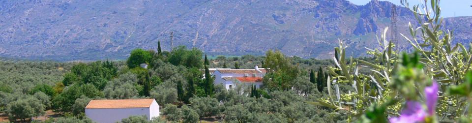 _Reitimmobilie_Finca_Antequera_Andalusien_Malaga_zu_kaufen_verkaufen