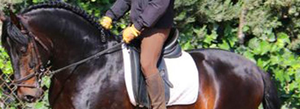PRE, Hengst, stallion, dunkel, spanisches Pferd, Spanier, Andalusier, zu verkaufen