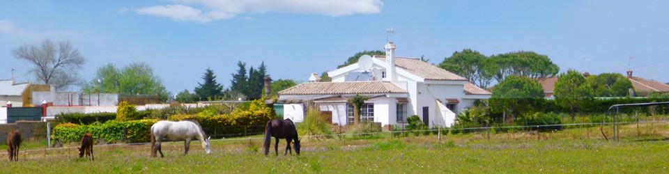 Haus, Ferienhaus, Villa, Reitimmobilie, Pferdehaltung, grosses Grundstück, nahe Strand, Chiclana, Cadiz, Costa de la Luz, Andalusien, zu verkaufen