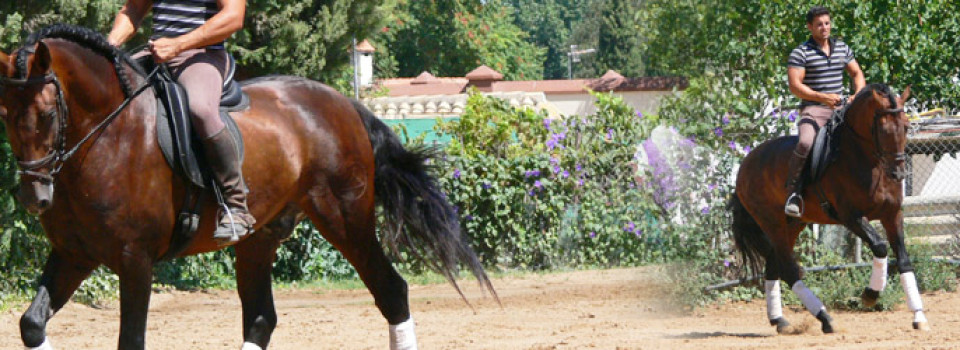 PRE stallion for sale in Spain