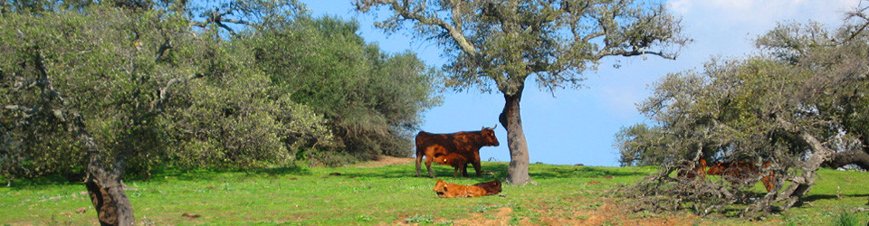 Finca, Reitimmobilie, Andalusien, Cadiz, Alcala de los Gazules zu verkaufen