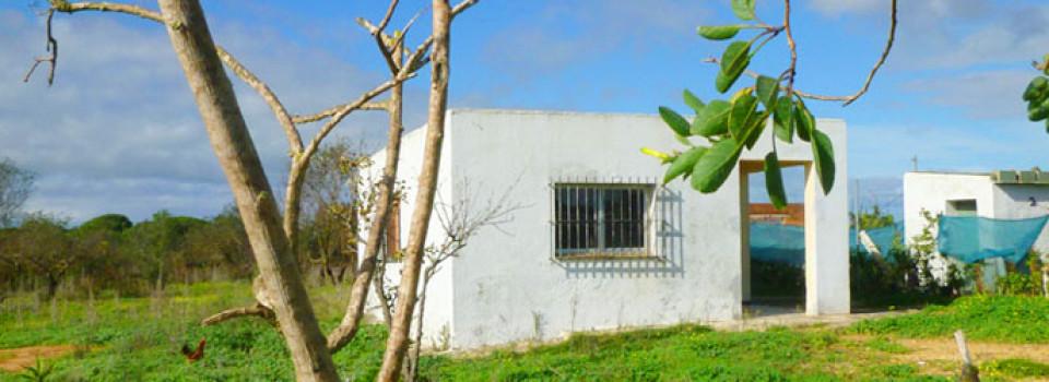 _suche_finca_zu_kaufen_in_Chiclana_finca_zu_verkaufen_Costa_de_la_Luz_kleines_Haus_mit_grossem_Garten_zu_verkaufen_Andalusien_Conil