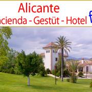 Costa_Blanca_Valencia_country_horse_equestrian_property_estate_hacienda_cortijo_stables_studfarm_events_boutique_hotel_for_sale_to_buy