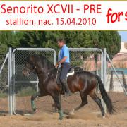 spanischer Hengst, gross, 1.71 m zu verkaufen nahe Jerez de la Frontera