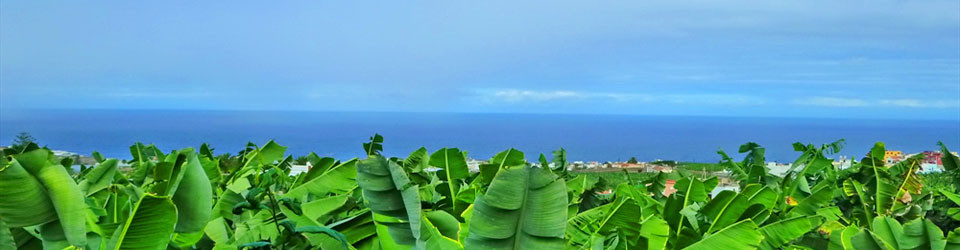 _looking_for_Real_Estate_country_horse_equestrian_property_finca_near_beach_Arucas_Las_Palmas_Gran_Canaria_for_sale_to_buy