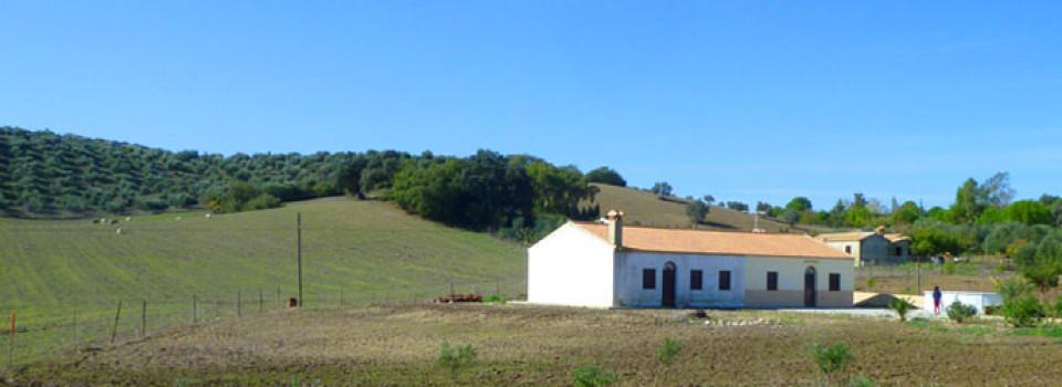 _looking_for_finca_country_holiday_house_home_Andalusia_Cadiz_inland_Villamartin_el_Bosque_Prado_del_Rey_for_sale