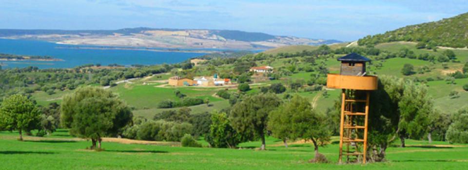 suche, Bauernhof, Reitimmobilie, Finca, Rinderfarm, San, Jose, del, Valle, Jerez, Andalusien, zu, kaufen, verkaufen