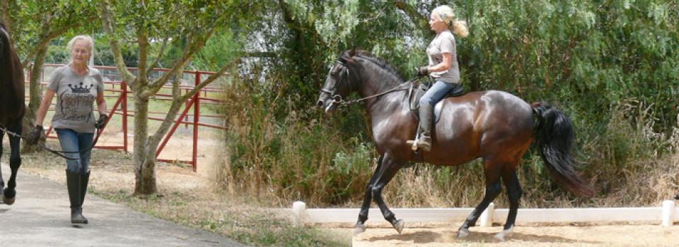 spanisches Pferd zu verkaufen