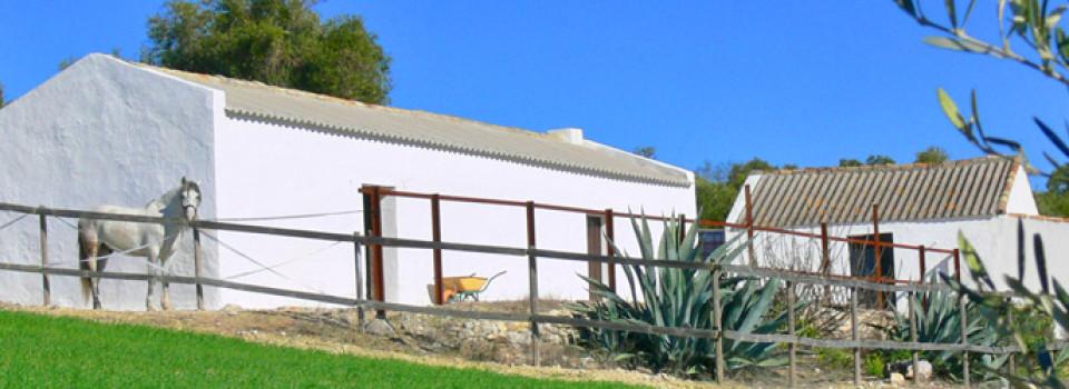 country horse property for sale in Arcos de la Frontera, Cadiz