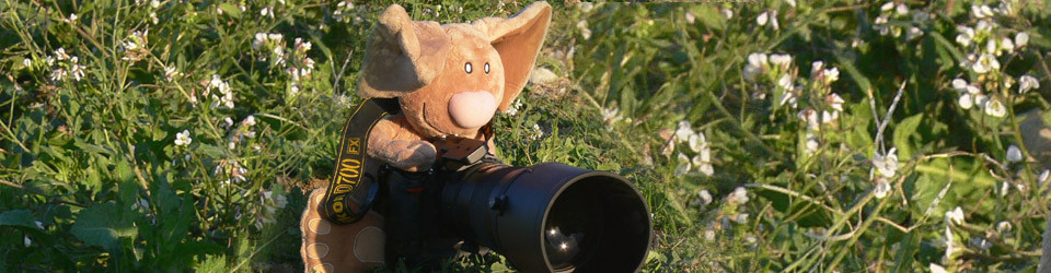 Fotograf Hase