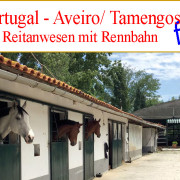 looking for equestrian property to buy in Portugal