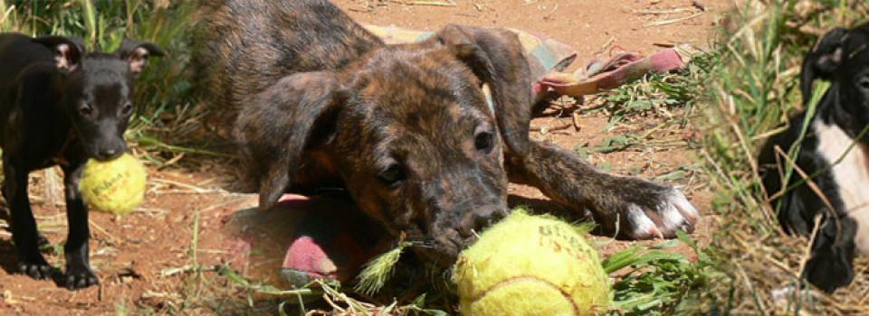 Hunde aus Andalusien suchen ein Zuhause