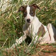 Sharyti - spanische Hunde suchen ein Zuhause
