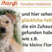 andalusische Hunde suchen ein Zuhause