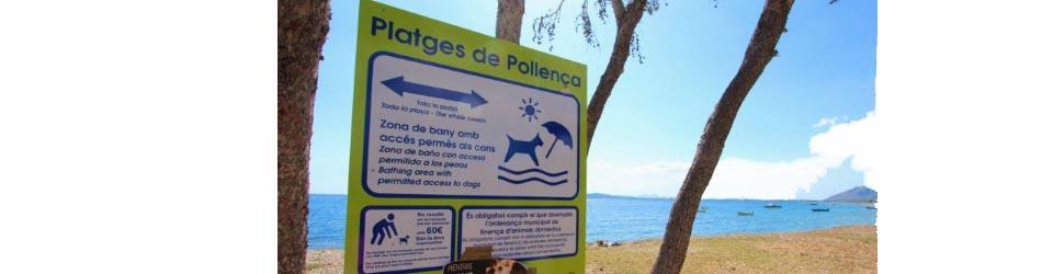 Hunde auf Mallorca