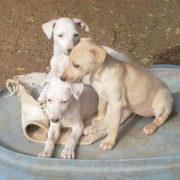 Sharyti Tierschutz Andalusien
