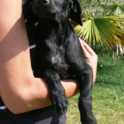 Sharyti Tierschutz Andalusien, Hunde suchen ein Zuhause