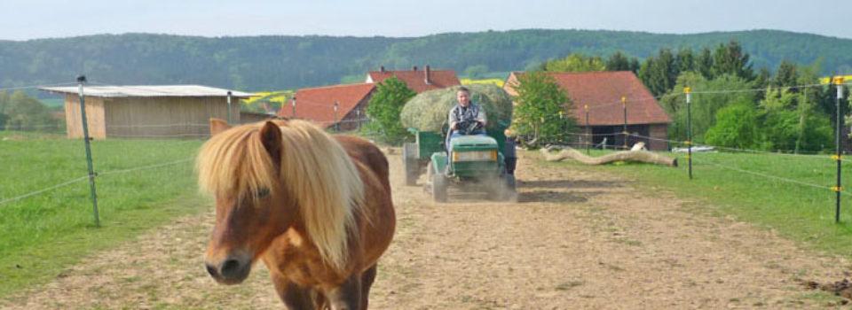 Reiterhof mit Aktivstall, Gästezimmer in Niedersachsen zu verkaufen