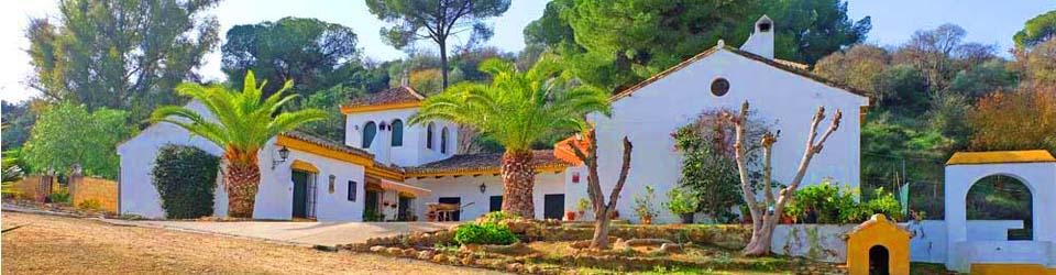 Finca mit Olivenplantage, Andalusien, Sevilla zu verkaufen