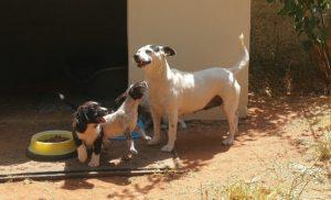 MIla, Hunde in Andalusien suchen ein Zuhause
