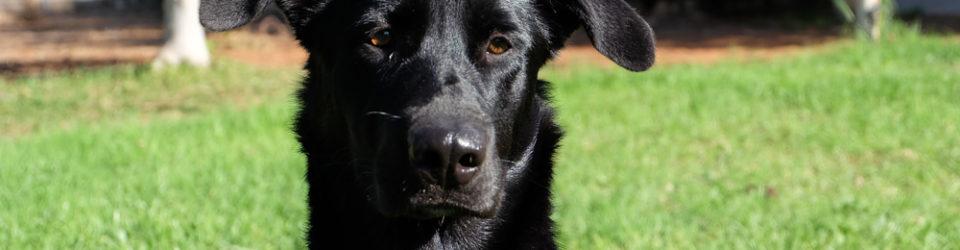 Tierschutz Andalusien