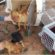 Finca zu verkaufen in Andalusien