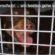 Sharyti, andalusische Hunde suchen ein Zuhause, Tierschutz Andalusien