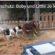 Sharyti, andalusische Hunde suchen ein Zuhause