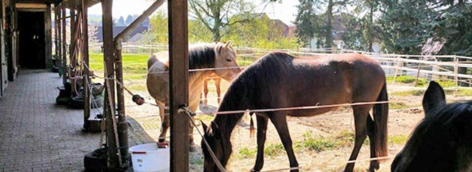 Haus mit Pferdestall in Hessen zu verkaufen